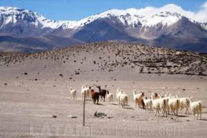 Cordillera de los Andes - Colchane, Chile
