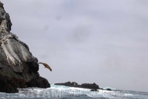 Reserva Nacional Pingüino de Humboldt - Isla Chañaral, Chile