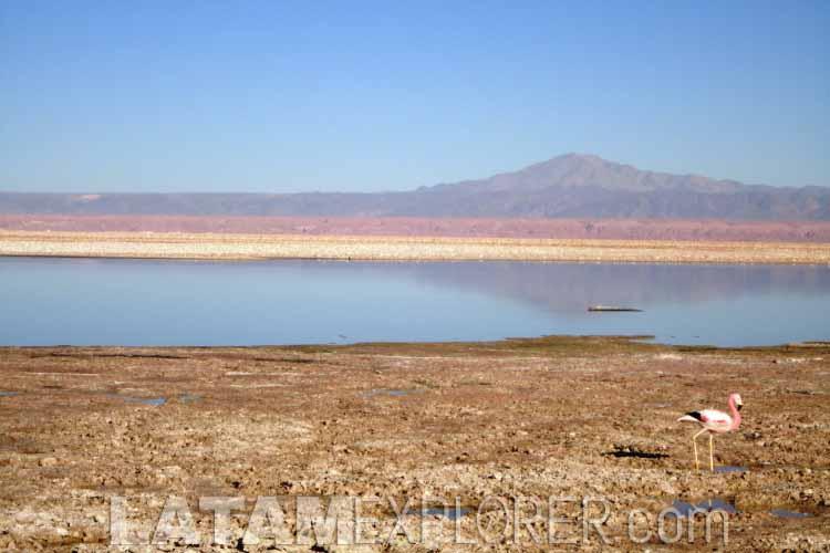 Salar de Atacama - San Pedro de Atacama, Chile