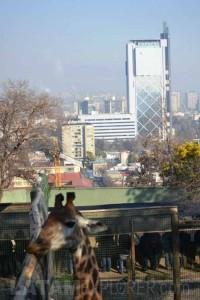 Zoo - Santiago, Chile