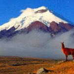 Ecuador - Chimborazo1